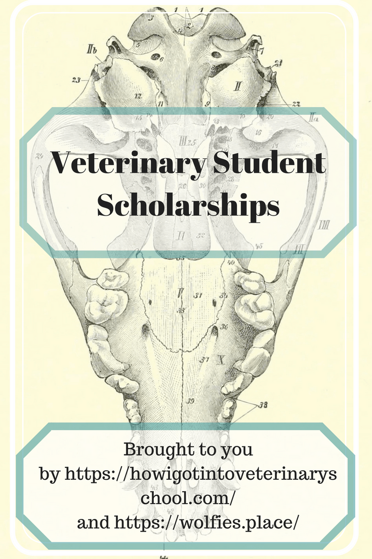 Veterinary student scholarships. We all know how expensive earning a DVM is, here are two scholarships to help offset some costs. #scholarship #vet #studentloans #vetschooltips #vetstudent #veterinarian