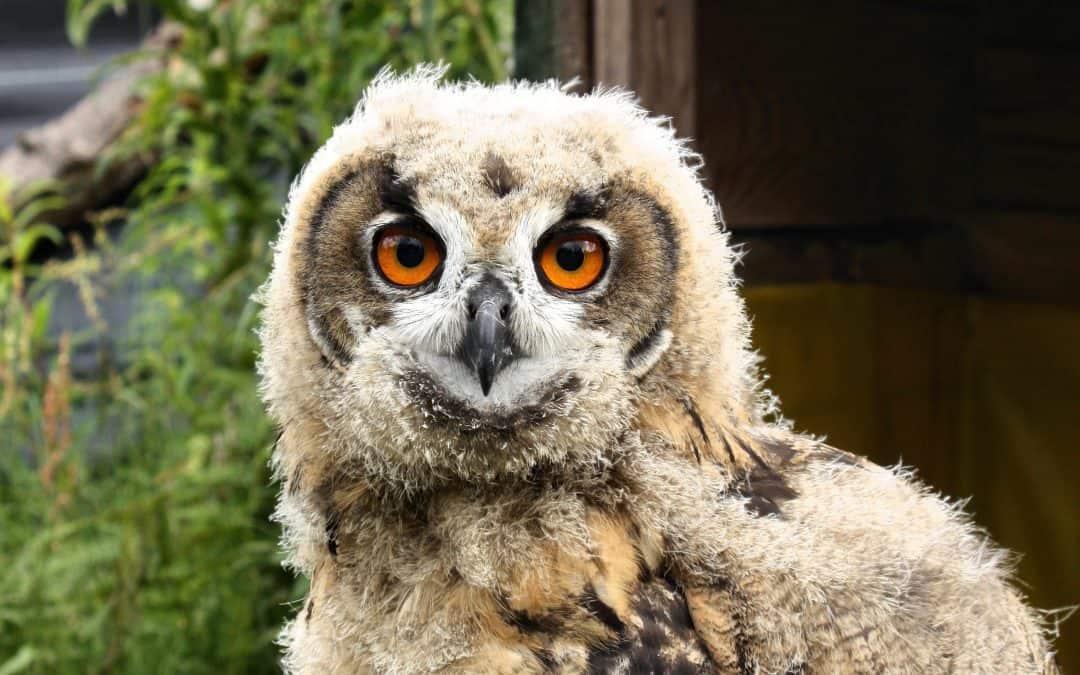 10 Animal Internship Ideas, Including Wildlife Internships and Zoo Internships