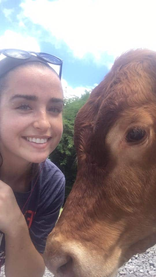 veterinary courses SGU Colleen McArdle and a cow
