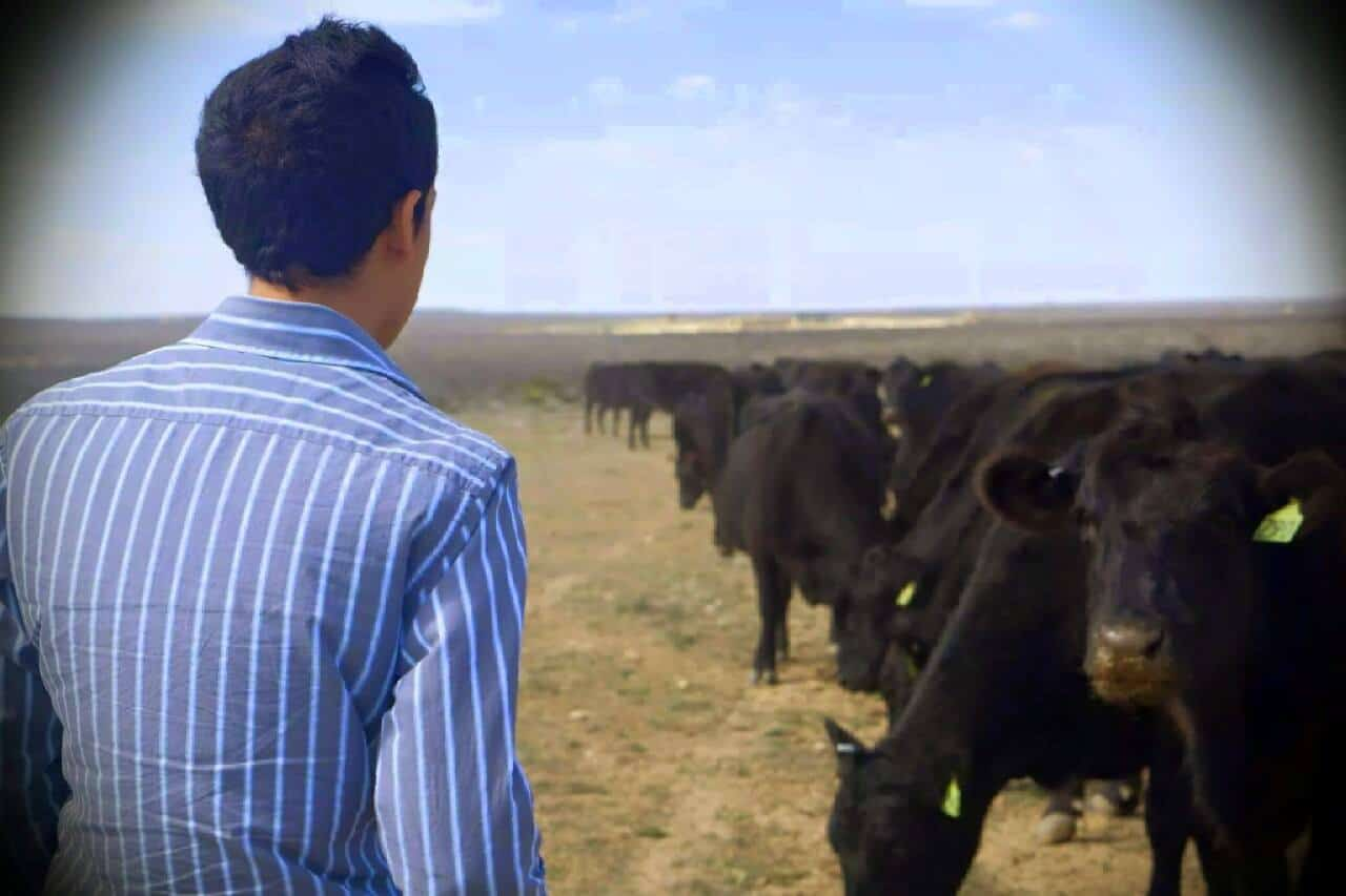 Kevin and the cows. Veterinary Experience hours. Interview with Kevin Ruiz who is in the Masters of Animal Science and Doctor of Veterinary Medicine program at Colorado State University.