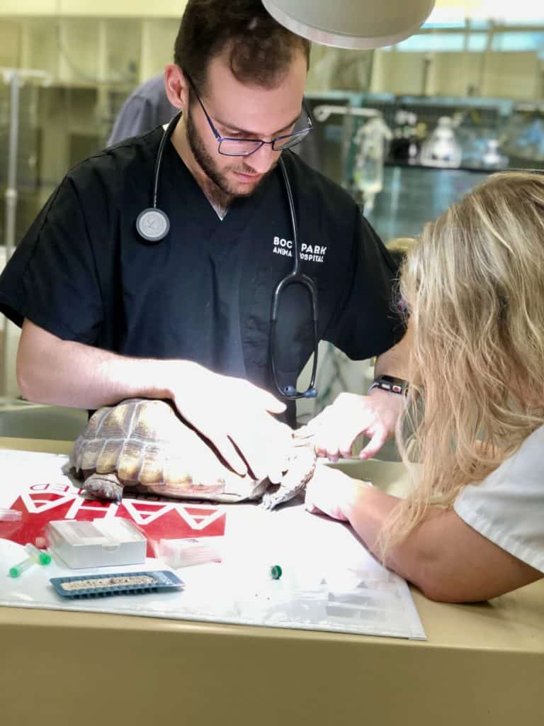 A csu vet student Yoshua, Dr. Anderson and I working on a tortoise at Boca Park Animal Hospital.