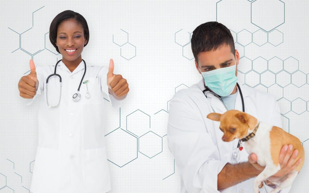 How Long Does It Take To Become A Veterinarian?