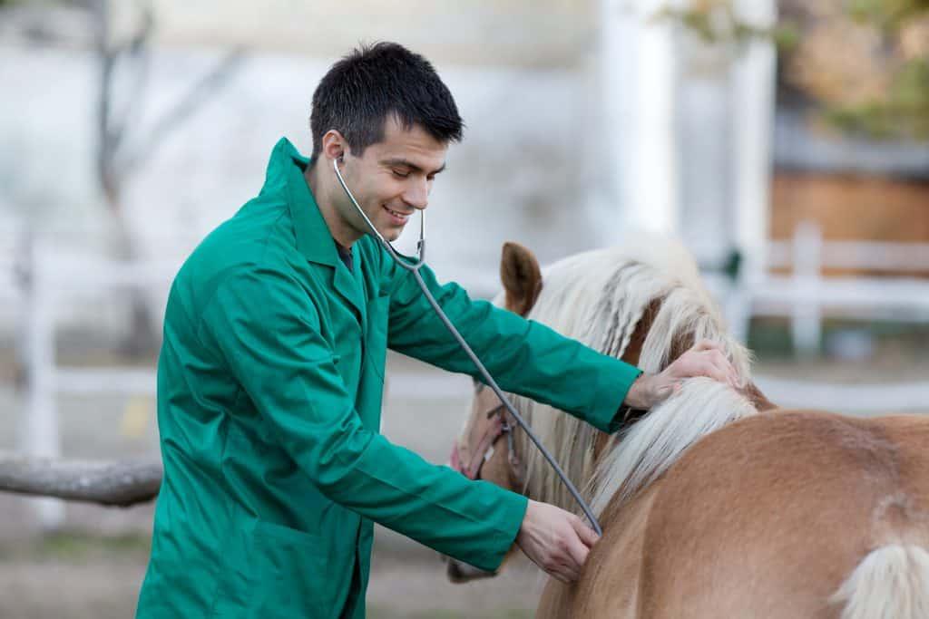 Equine vet wearing green coveralls.