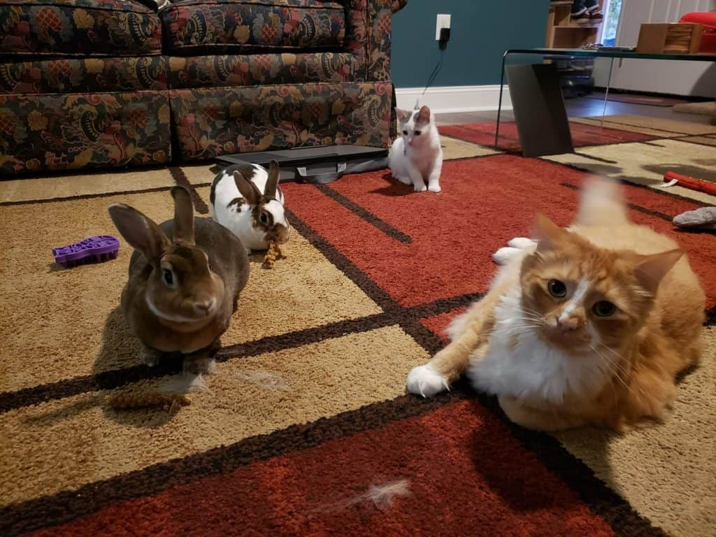 Bunnies and Kitties that veterinary student Matt Crawford-Jennings brought to VMRCVM.
