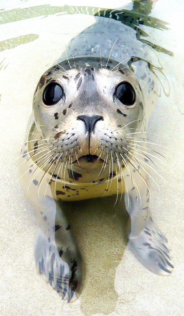 Working with marine mammals. How to get a job in marine biology.
