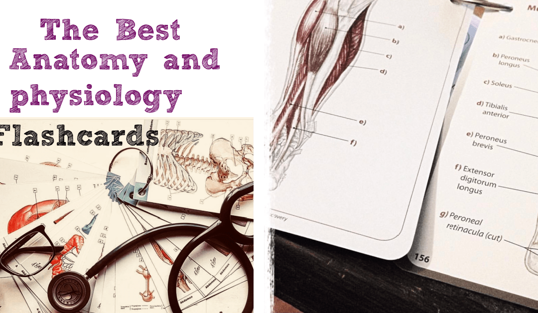 8 of the Best Anatomy and Physiology Flashcards