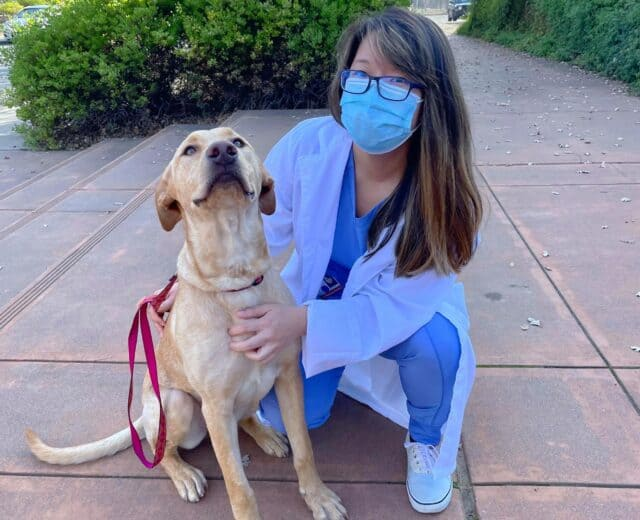 Molly Mettler's a UC Davis vet school student and a lab mix. Molly is wearing blue scrubs.